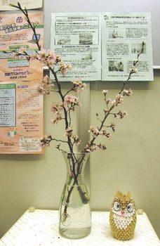 183 桜の花 01.JPG