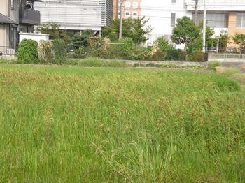 428-1 サワワ 01.JPG