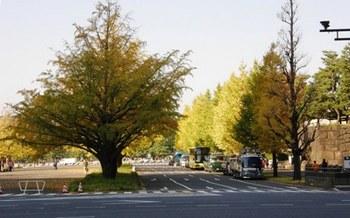557-4 ワークフェアー2011-5 皇居の秋.JPG