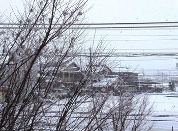 642-1 【おまけ】初雪 20121210.JPG